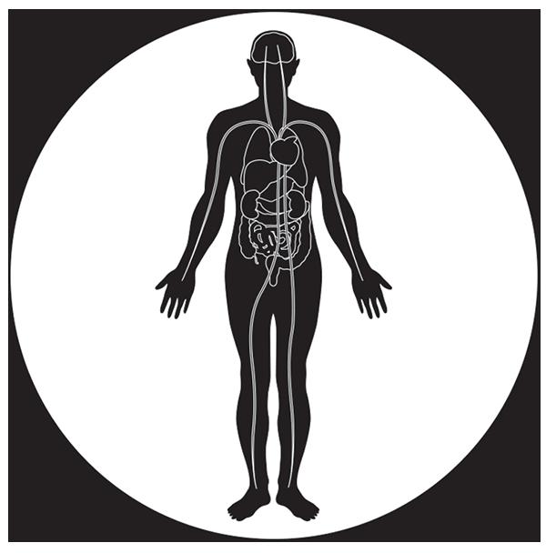 morphologie homme